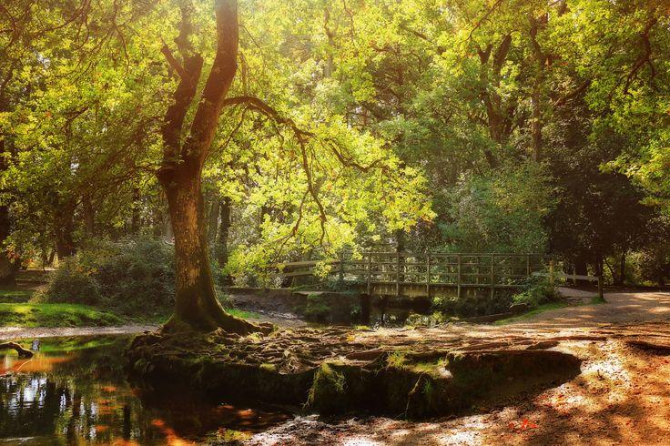 Autumnal New Forest. Осенний лес. Национальный парк Новый Лес, графство Хэмпшир, Англия.