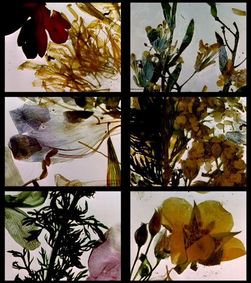 The Garden of Earthly Delights (1981), Stan Brakhage