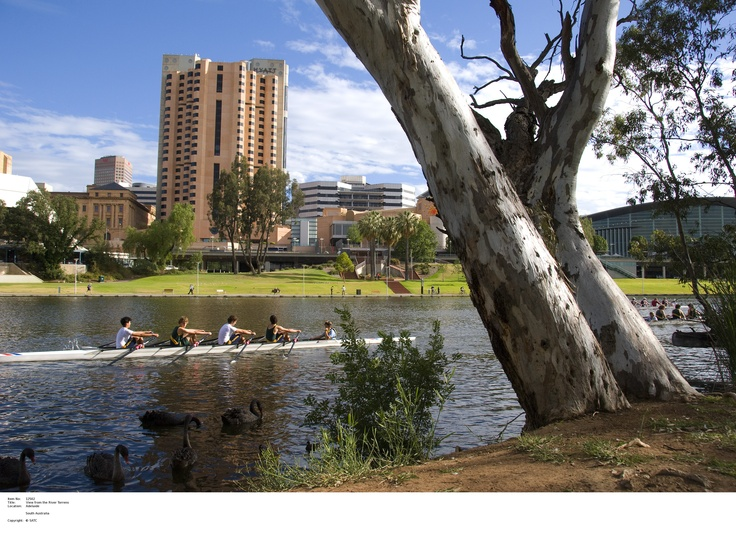 View from the River Torrens.    Image Source: SA Tourism Commission.