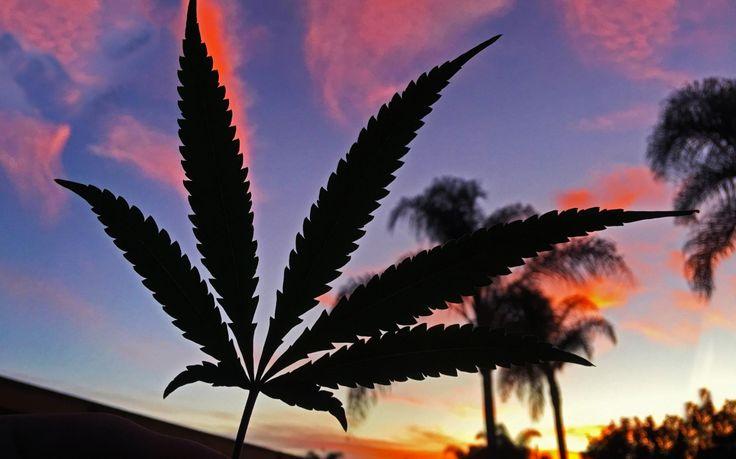 ¿Cómo consumir marihuana? - 3 Consejos importantes para principiantes  Es importante estar preparado cuando se trata de consumir productos de marihuana comestibles por primera vez.Si normalmente fumas o vaporizas el cannabis, la idea de consumir productos com...