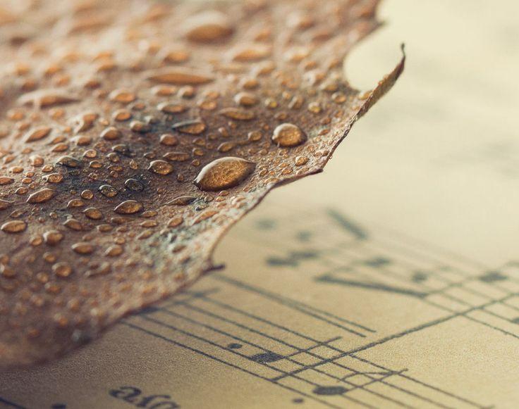 Autumn Poetry by VinaApsara.deviantart.com on @DeviantArt