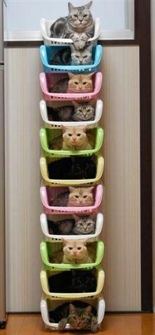 Kitty Cat Storage - this way I can have room for more of them ;)