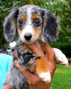 All time faves! | A community of Dachshund lovers!