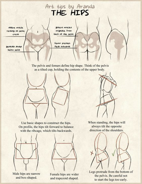55 Best Reference Female Anatomy Images On Pinterest Sketches