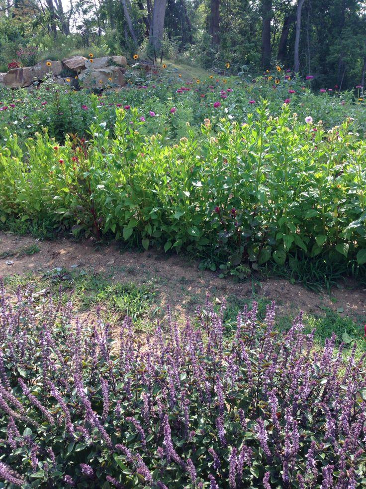 Pick Your Own Flower Garden Craggy View Gardens in Barnardsville NC