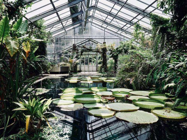 Ein Nachmittag Im Botanischen Garten Botanischer Garten Bonn Botanischer Garten Garten