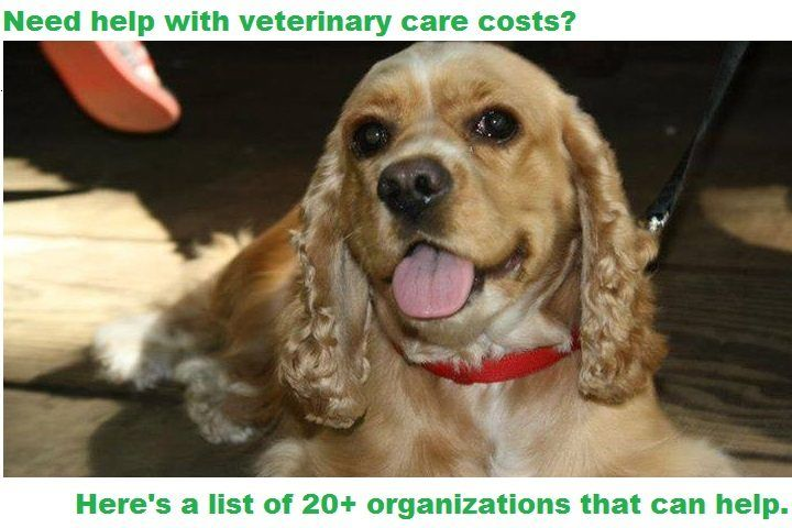 Need help paying for veterinary care for your beloved companion pet? These agencies can help you take care of your beloved pet. AVMF's Veterinary Care Charitable Fund Veterinary clinics and hospitals that partner with the AVMF can offer low and no-cost services to clients who cannot afford veterinary care. The intention of this program is …