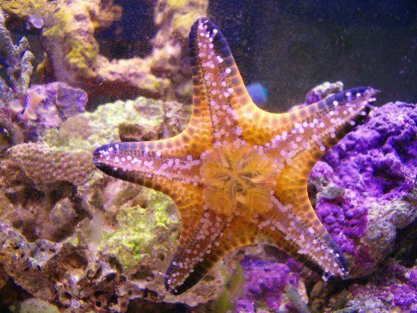 Pin On Aquarium Invertebrates