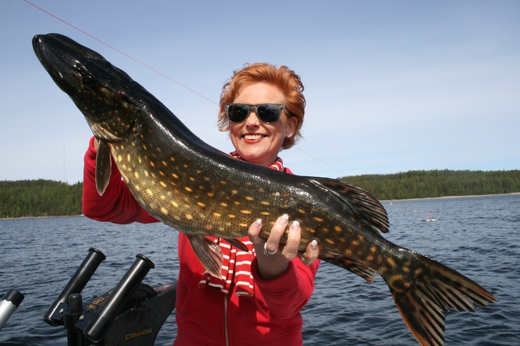 My very first pike :)! You are very welcome to fishing on lake Saimaa!