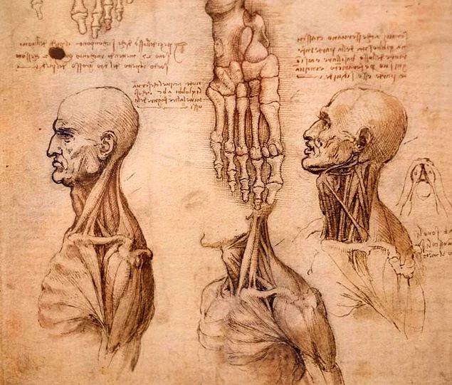 19 besten da vinci Bilder auf Pinterest | Anatomie, Menschliche ...