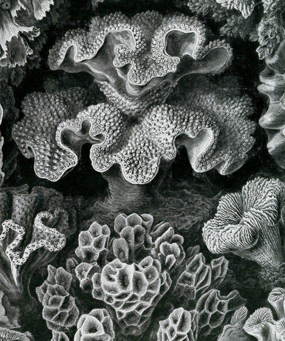 Wissenschaftliche Kunst, Korallenmeer, Kunstwissenschaft, Meereskoralle, Wissenschaftliche Koralle, Korallenar …   – N E W P R O J E C T