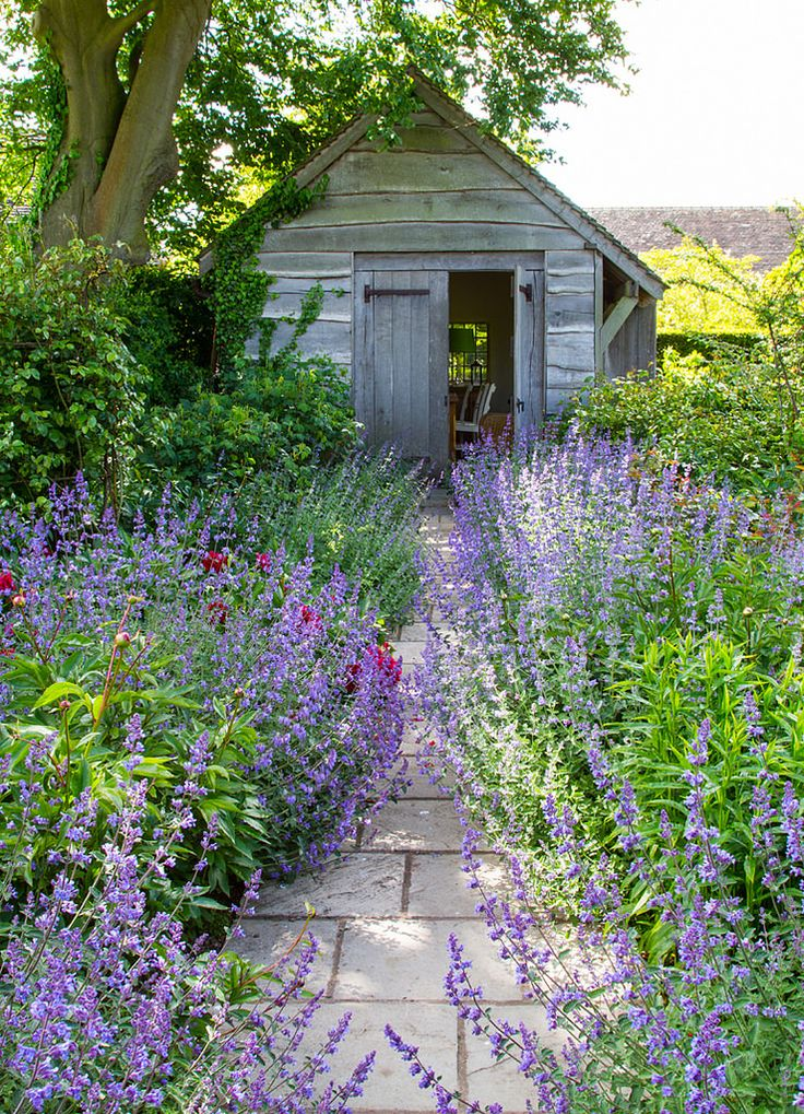 Absolutely love the soft edges of this garden path ~ nepeta abounds