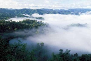 kaeng krachan national park, sea of fog