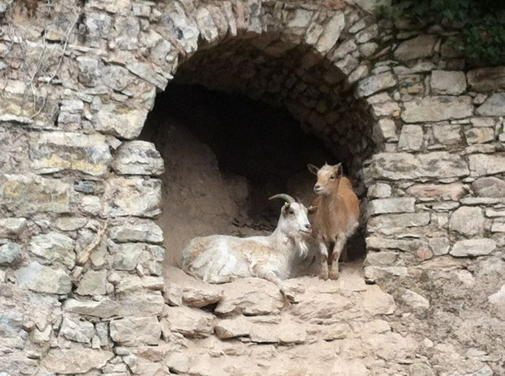 Abitanti di una Limonaia di Bogliaco vicino a Gargnano