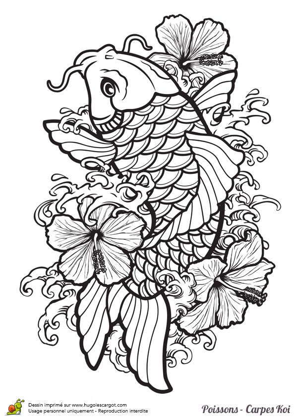 Coloriages poisson carpe koi coloriage