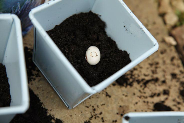 how to grow a magic bean