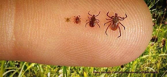 This could be the most important thing that you see me post! Its an epidemic this year, and these things are as lethal as a venomous snake in the wrong senerio! Please not only read it, but share it! Make sure we get the word out about these tics and the disease they carry!  It's summer! Time for camping, hiking and getting outside to play. Don't let those pesky annoying ticks stop you. Here's how... See More