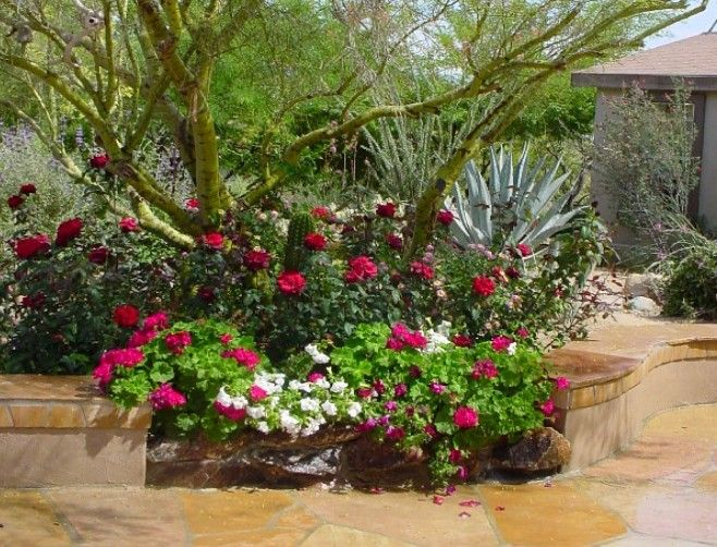 Landscape design in phoenix arizona arizona landscaping for Landscape design phoenix
