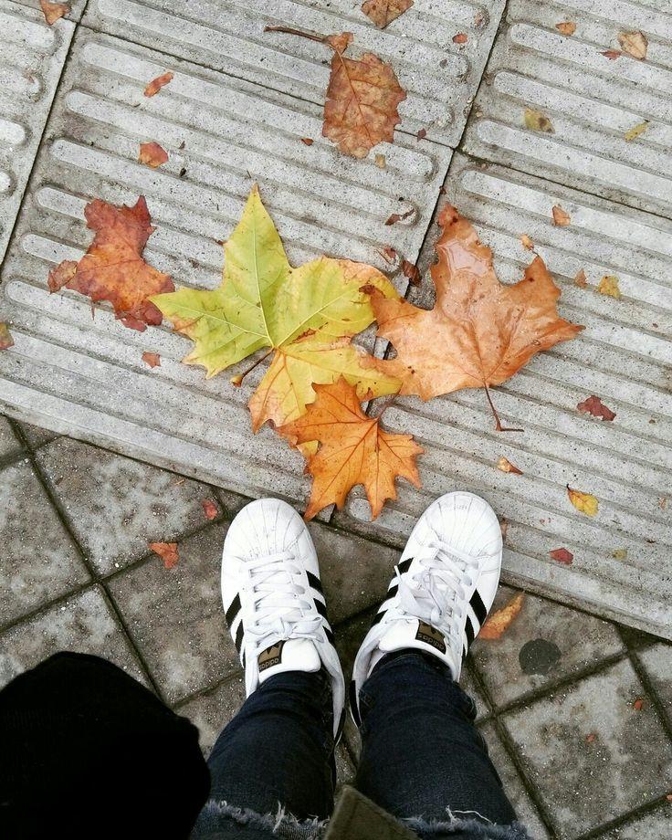 Con esta foto quiero hacer ver a los niños dos cosas, la primera las diferentes estaciones del año, exactamente te otoño que es en la que estamos ahora mismo. Y la otra los diferentes tipo de hojas caídas pueden encontrarse, distinto color, tamaño, forma.. La naturaleza es algo importante que los niños tienen que respetar