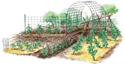 Vertical Gardening Techniques for Maximum Returns    You can grow bigger, better cukes, beans, tomatoes and cantaloupes with simple, sturdy trellises.