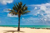 Palm Tree on the Beach with Blue Sky Photograph as Fine Art Print