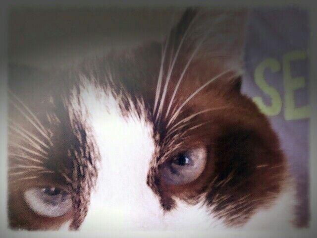 Mai lasciare in giro il cellulare #Goku #cat #selfie #animal