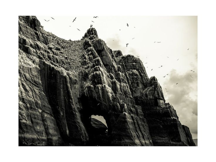 Seabirds at Little Skellig by AR Photography for Minted
