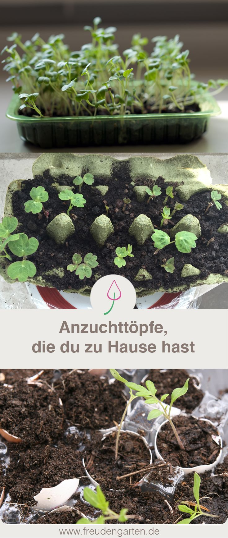 Pflanzen vorziehen in Anzuchttöpfen, die nichts kosten. #Garten #Gartenidee #Gartentipp #Gärtnern