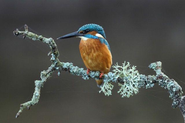 kingfisher  #bird www.nbcbirdandpestcontrol.co.uk