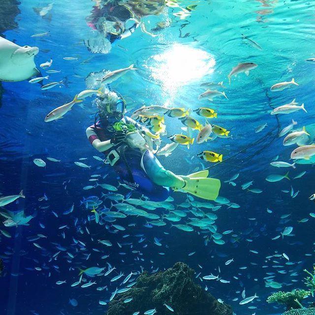 【fuyu.l】さんのInstagramをピンしています。 《マーメイドのようなお姉さんが食べさせているのは、なんと、小松菜‼ 黄色のお魚さん達の大好きな餌なんだって‼  #ファインダー越しの私の世界#ふぁいんだー越しの私の世界 #やっぱり水中が好き#水族館が好き#アクアリウム#aquarium#魚#さかな#お魚#fish#フィッシュ#池袋#サンシャイン#サンシャイン60#サンシャイン水族館#青の世界#水中#青#碧#ブルー#blue#東京都#年末#小松菜#人魚#マーメイド#mermaid》