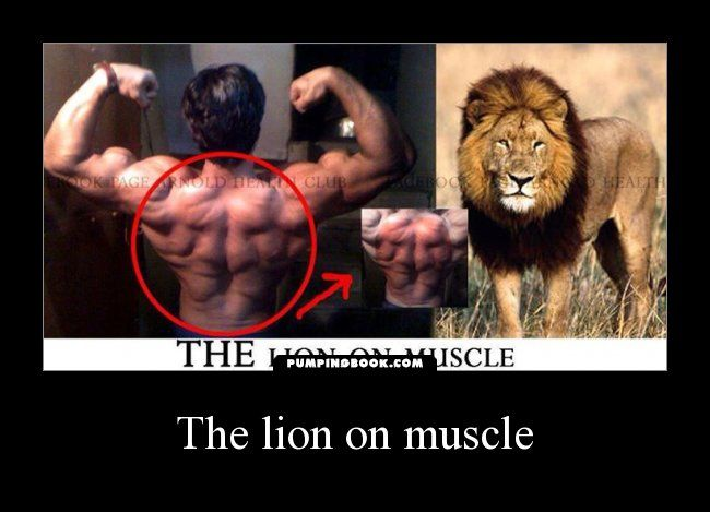 On Http://www.bodybuildingmotivation.net/wp Content/gallery. Be  StrongBodybuilding ...