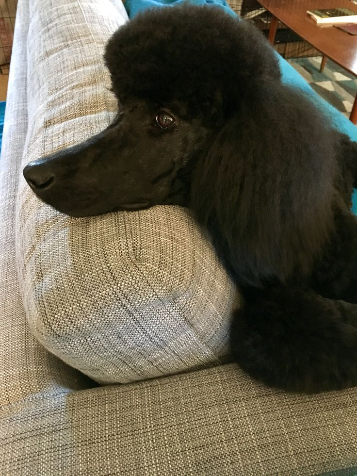 Gigi -10 months old. Spa day