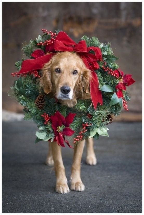 i love wreaths..and too bad he had to walk home like that..poor puppy :) ✿✿ڿڰۣ(̆̃̃-- ♥ Donna-NYrockphotogirl