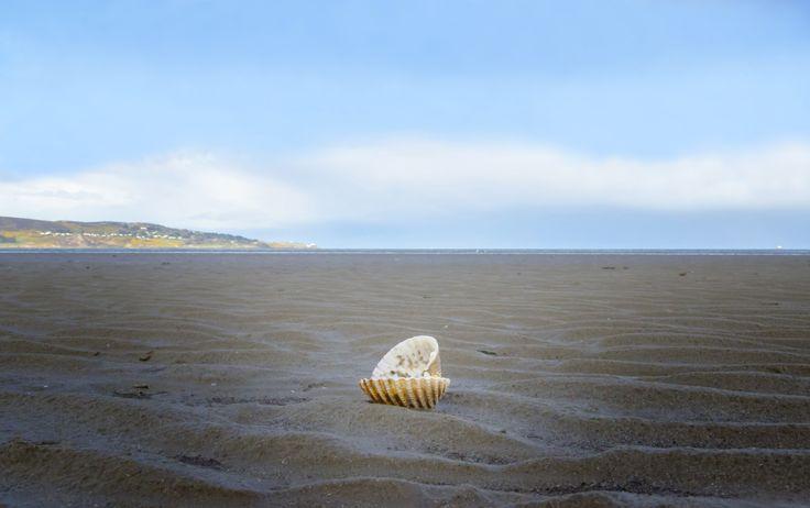 A lone Sea Shell on Bull Island, Dublin.