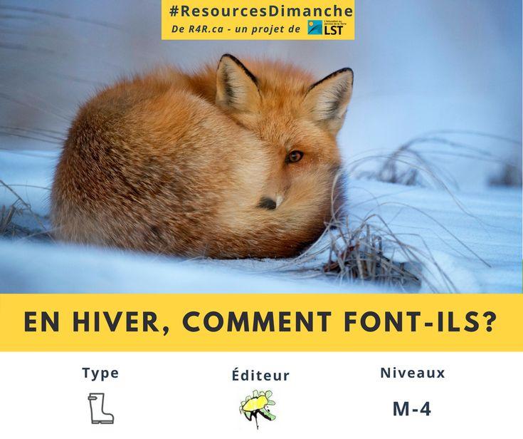 Cette semaine #ResourcesDimanche de #R4R.ca vous inspire à découvrir les drôles de comportements des animaux, de mieux les comprendre, et comment les aider à passer l'hiver.  Visitez http://resources4rethinking.ca/fr/resource/en-hiver-comment-font-ils?utm_source=Facebook&utm_medium=Social&utm_campaign=RS-3-JAN-2018 et téléchargez la ressource «En hiver, comment font-ils?» aujourd'hui pour commencer!