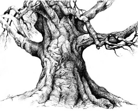 Tree Trunk Detailed Drawing   Wakefield, RI - We lost a tree last week, a true heritage tree, a ...