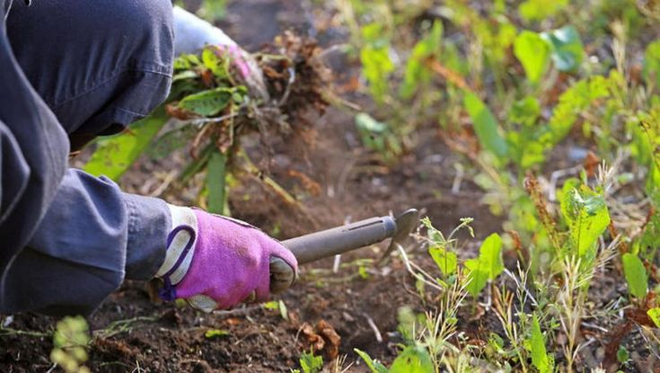 8 непростительных ошибок, которые вы совершаете каждую осень. Осень – то самое время года, когда хочется поскорее закончить работы в саду и огороде, чтобы, наконец, закрыть сезон. Но не стоит торопиться, иначе можно упустить что-нибудь важное.