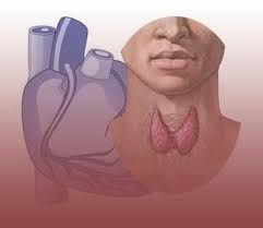 One of the underlying causes of high blood pressure can actually be an underactive thyroid.  In case your thyroid doesn't produce enough calcitonin and your diet is high in dairy products. Calcium accumulates in your blood and starts lining you artery-walls. The canals narrow more and more, the blood pressure rises and you are in risk of heart disease. Your GP puts you on statins, tells you to reduce dairy, fats and sugar but the main cause has not been addressed. How likely are you to…