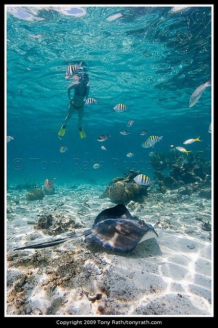 Hol Chan Marine Reserve, Ambergris Caye, Belize