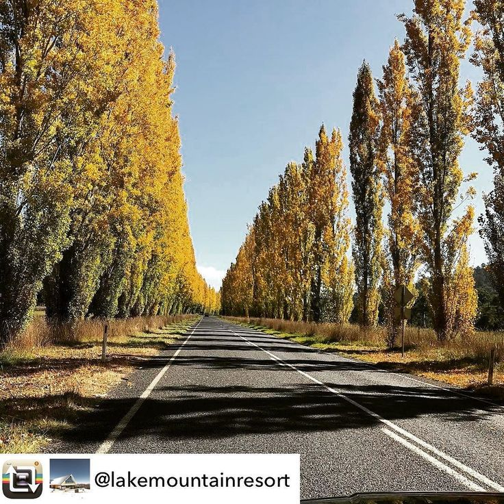 Gould Memorial Drive between Buxton and Marysville is just coming out in full colour as snapped by @lakemountainresort.  Make sure you see it over the few weeks! #visitheartofvic #visitmarysville