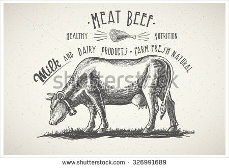 Cow in graphic style, from hand drawing image.