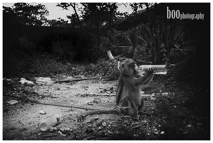 Boo Photography