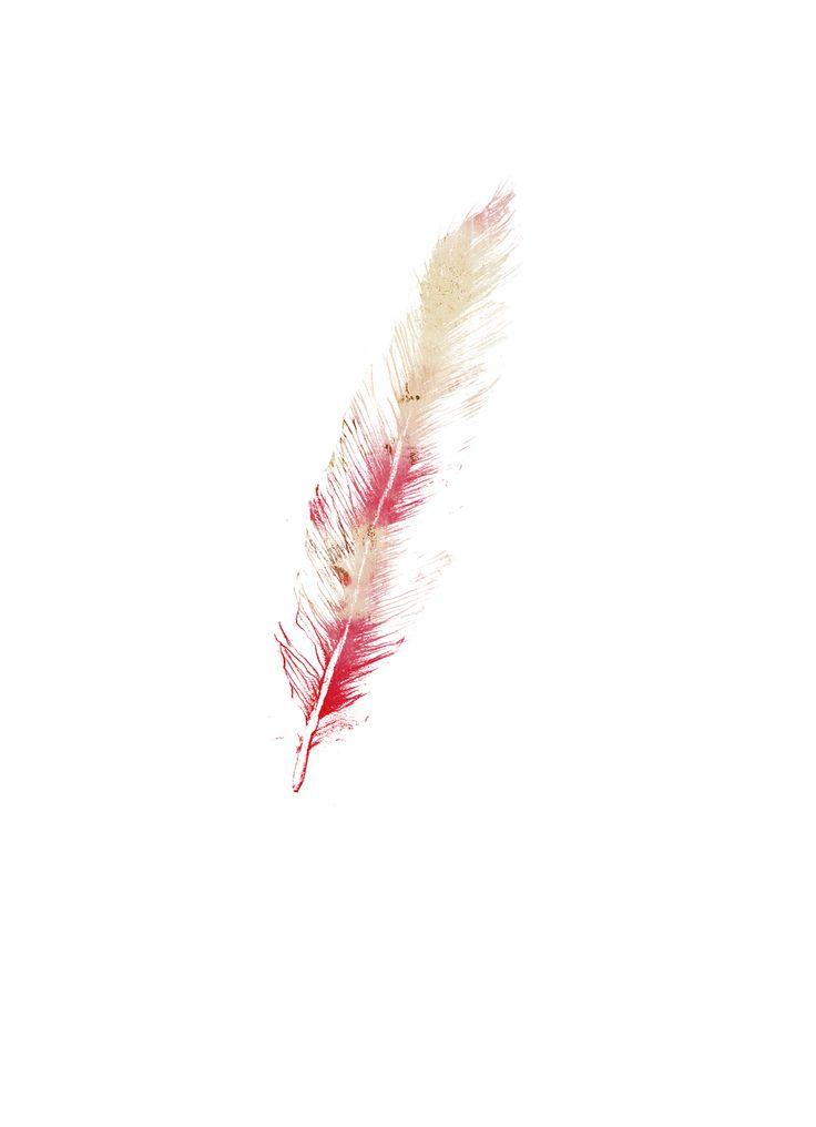 Mixed Media Illustration Gelliplate Feather