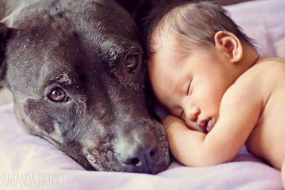 În grija băieţilor mari! Bebeluşii supravegheaţi de câini uriaşi - Galerie Foto