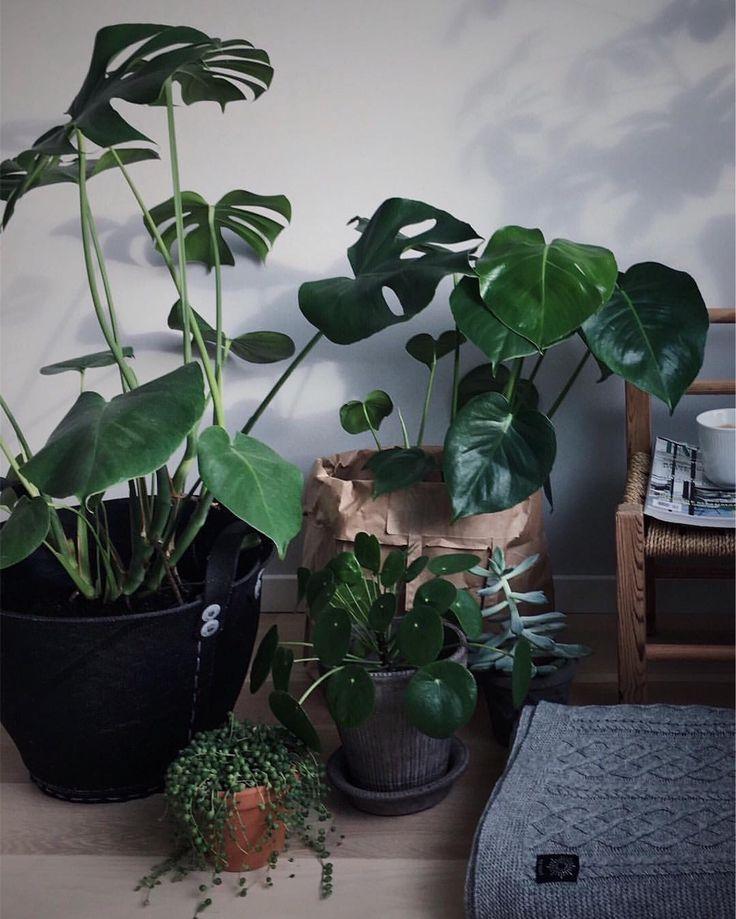 2,095 отметок «Нравится», 34 комментариев — Janne (@earlymorningheart) в Instagram: «Let's spread some green love 🌱🌿 good morning! #urbanjungle»
