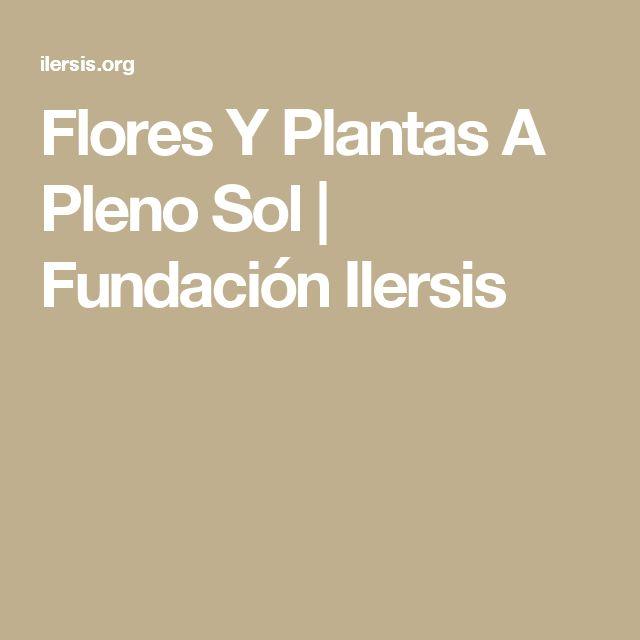 Flores Y Plantas A Pleno Sol | Fundación Ilersis