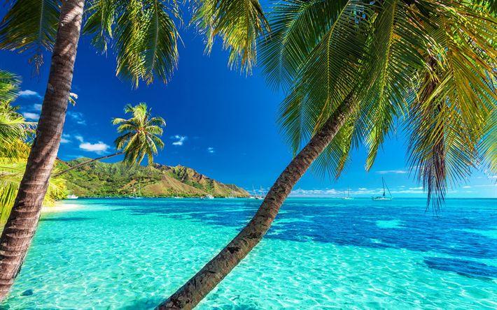 Lataa kuva Malediivit, meri, palmuja, kesällä, tropiikissa