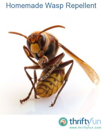Keeping wasps away from your outdoor activities can be a challenge. For those who are allergic to their sting, they can be life threatening. This is a guide about Homemade Wasp Repellent.