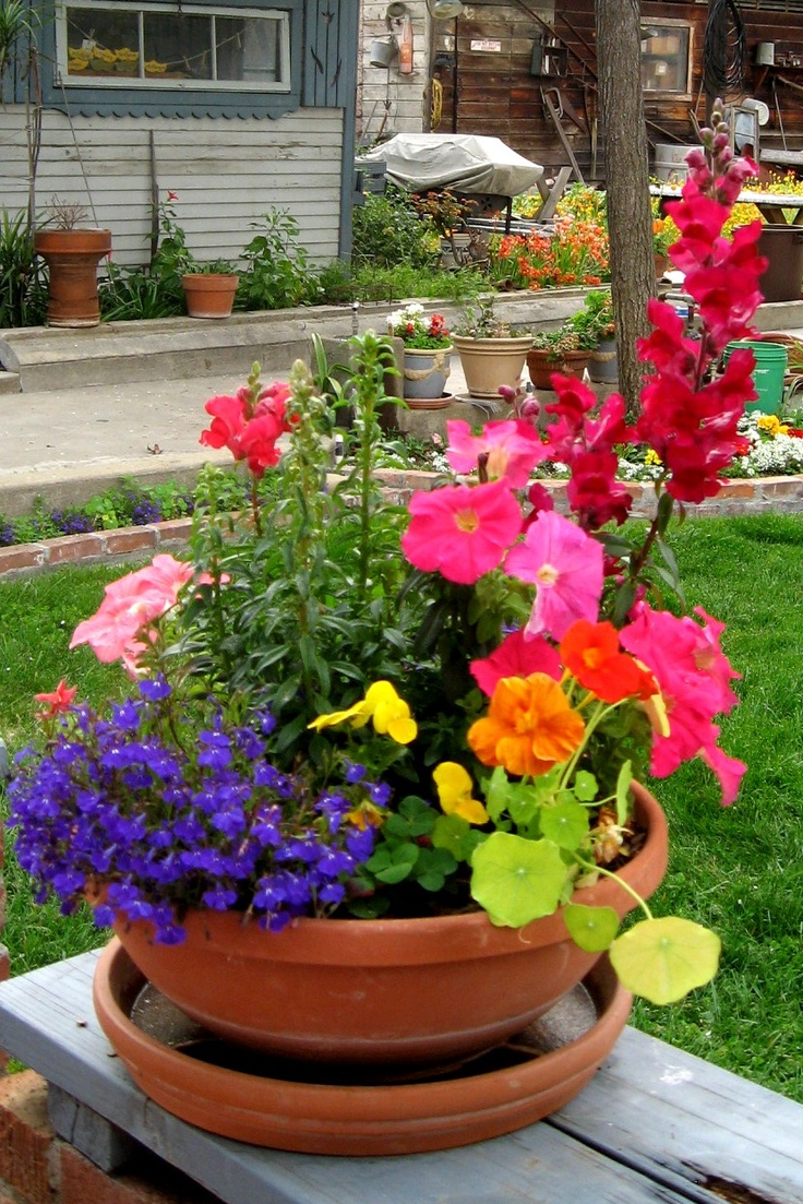 "Take a medium size pot & plant one of 4 - 5 different flowers: You'll have a colorful ""garden!"""