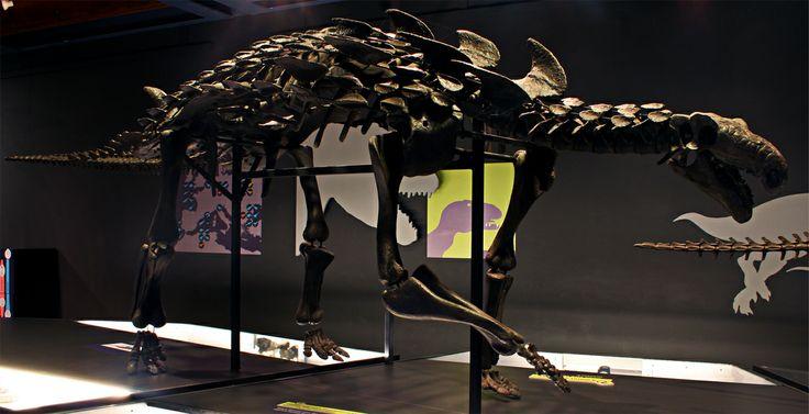 Hungarosaurus tormai skeletal reconstruction - Hungarian Natural History Museum, Budapest